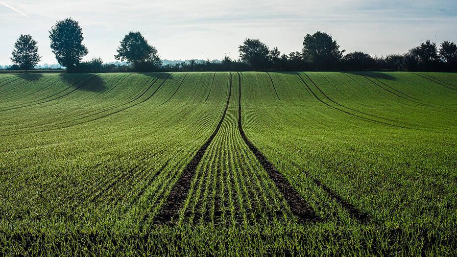 Paradigma Verde
