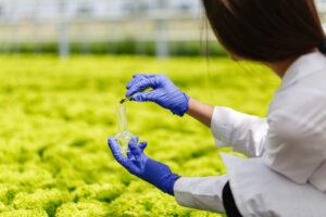 El sensor está preparado para detecta en las flores, frutas y verduras rastros de etileno antes de que la descomposición sea demasiado avanzada.