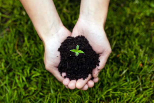 Se ha demostrado que se trata de un material de lo más beneficioso para el medio ambiente, ya que es una planta fácilmente aprovechable y que puede utilizarse en distintos sectores.